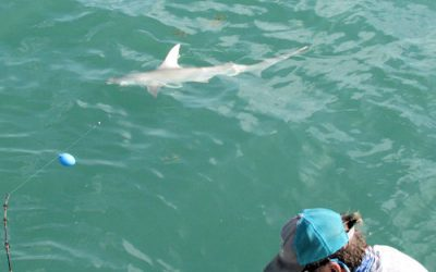 Shark Fishing in Calm Water