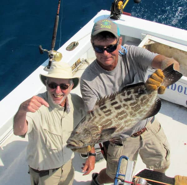 Big Black Grouper Released in Key West fishing on charter boat Southbound