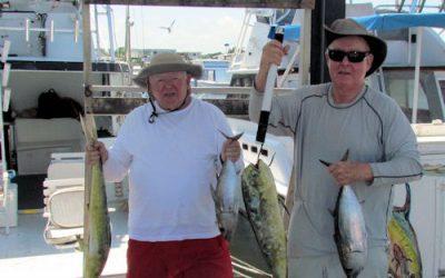 Dolphin and Black Fin Tuna