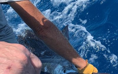 Trolling and live baiting for sailfishing