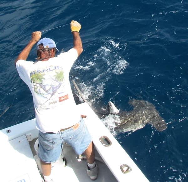 Big Hammerhead Shark ate our last barracuda while fishing in Key West florida