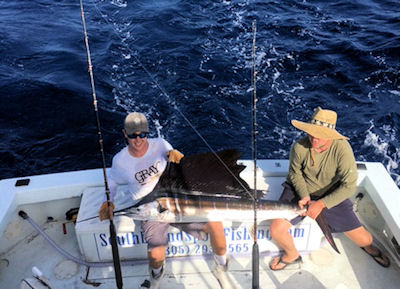 Sailfish caught and released in Key West fishing on Key West charter boat Southbound