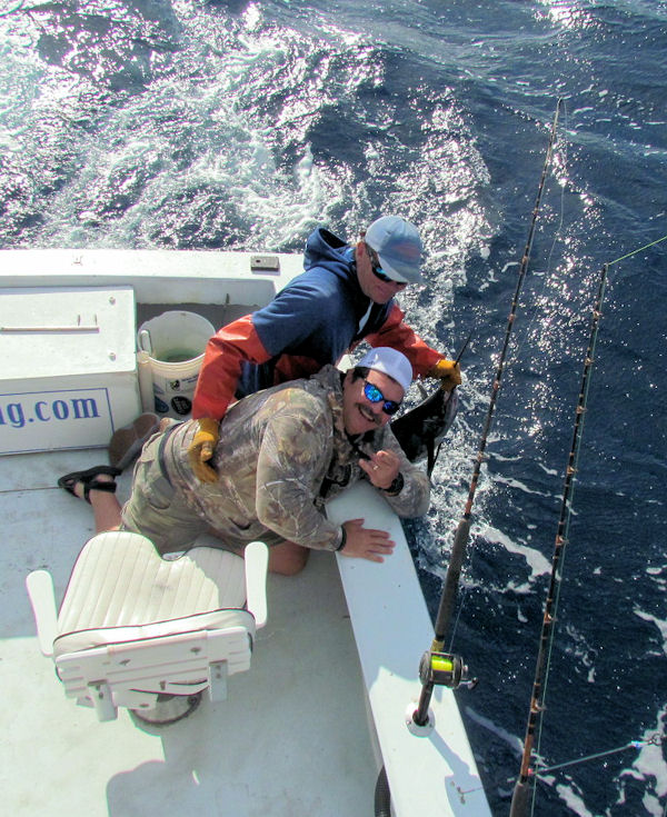 Sailfish caught and released in Key West fishing on charter boat Southboun