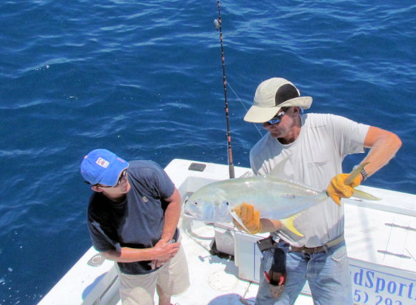 Cravalle Jack caught and released in Key West fishing on charter boat Southbound