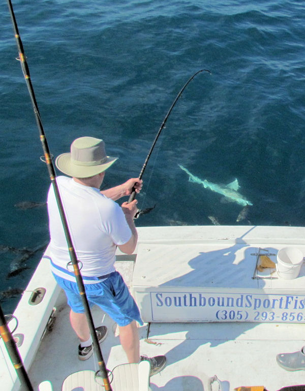 Blacktip Shark caught and released in Key West fishing on charter boat Southbound