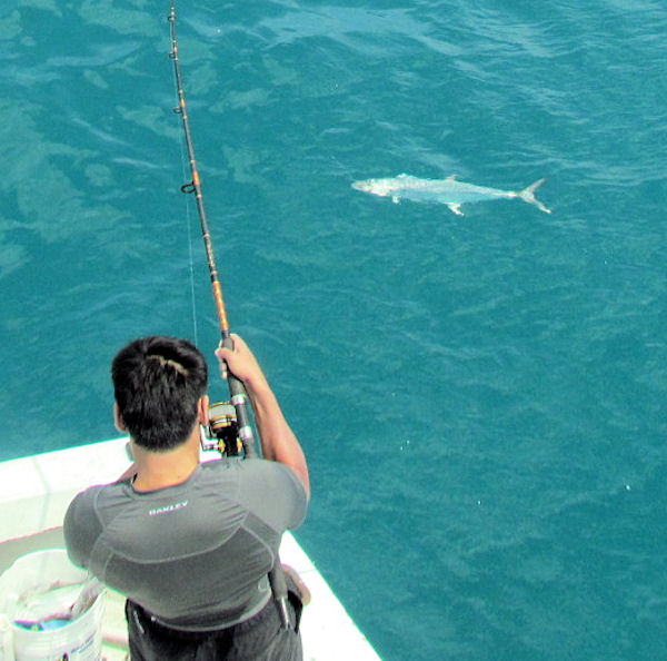 King Mackerel caught in Key West fishing on charter boat Southbound