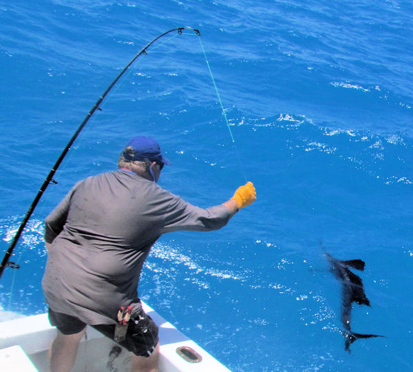 Sailfish caught and released in Key West fishing on Key West charter fishing boat Southbound