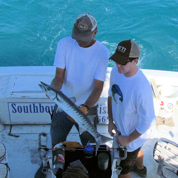 Barracuda caught  and released in Key West fishing on charter boat Southbound