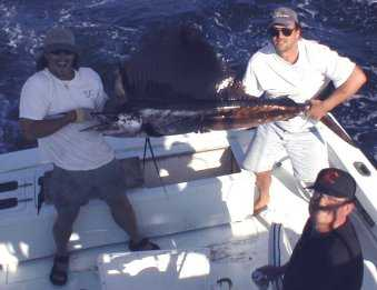 Best Sailfish caught aboard Southbound in Key West Florida in 2000