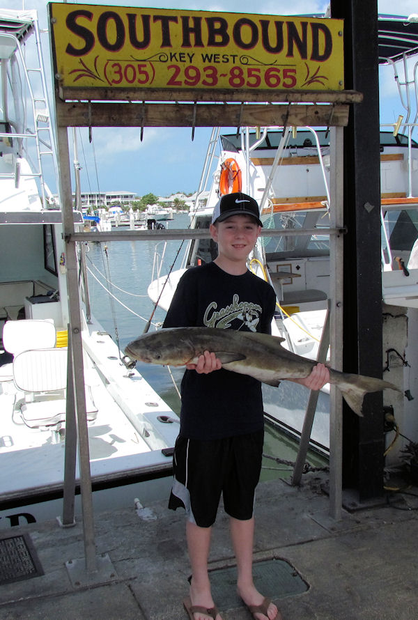Cobia caught in Key West fishing on charter boat Southbound from Charter Boat Row, Key West