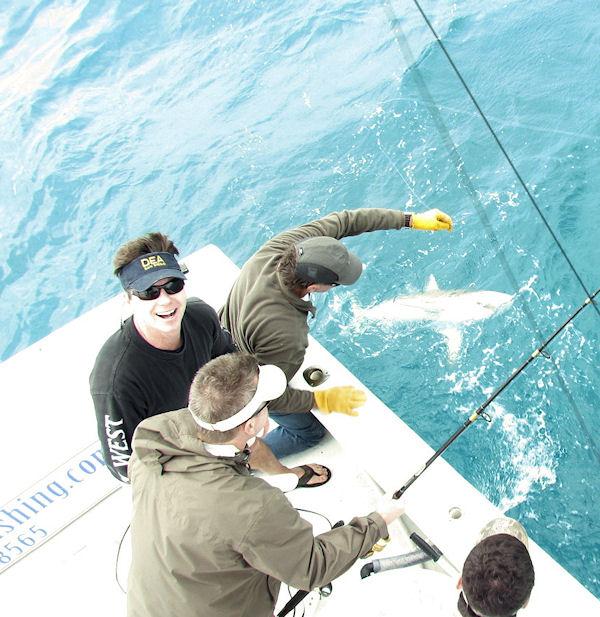 Shark caught fishing Key West on charter boat Southbound from Charter Boat Row Key West