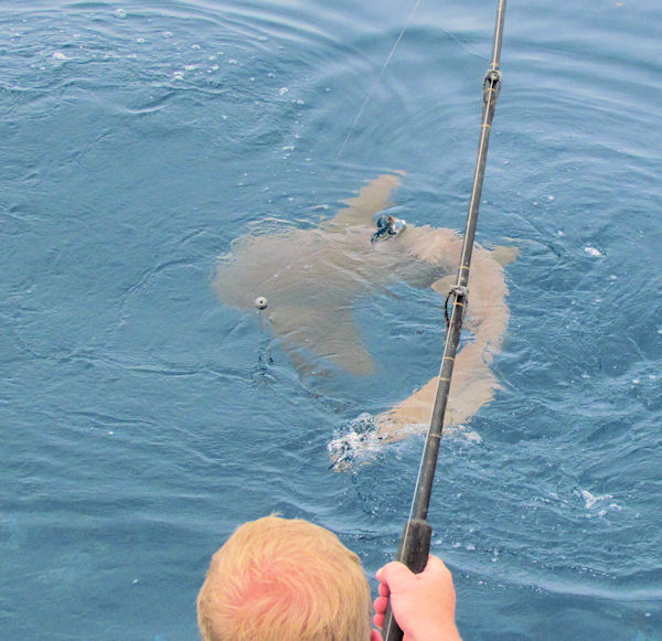 Nurse shark caught in Key West fishing on charter boat Southbound from Charter Boat Row