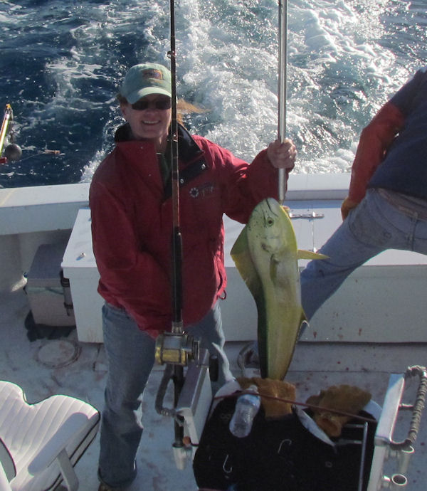 Dolphin caught fishing in Key West on Charter Boat Southbound from Charter Boat Row Key West