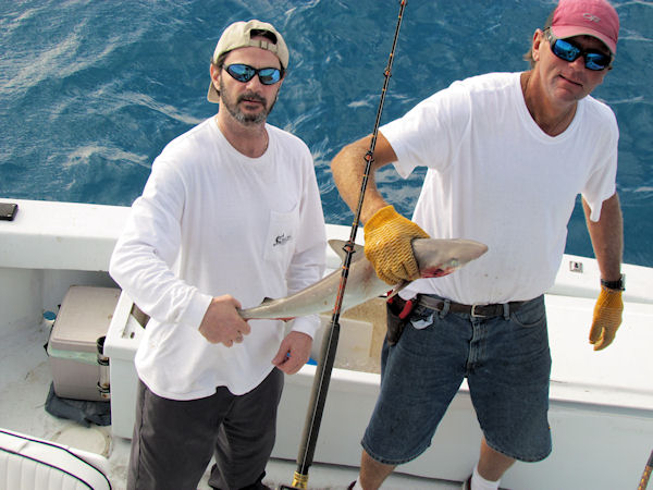 Small Shark caugth in Key West fishing on charter boat Southbound from Charter Boat Row Key West
