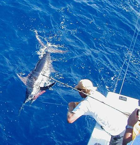 Best Blue Marlin