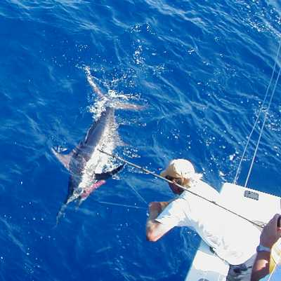 Key West Marlin