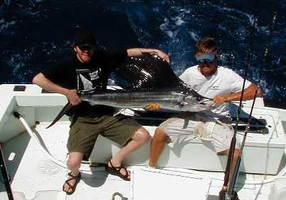 Key West Sailfish