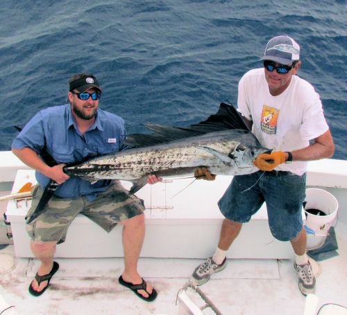 Sailfish caught and released fishing in Key West on Charter Boat Southbound from Charter Boat Row Key West