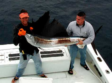 Sailfish caught aboard Southbound in Key West Florida in 2003