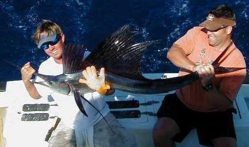 sailfish2.jpg (15972 bytes)