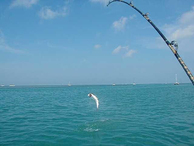 Best Tarpon Jump  aboard Southbound in Key West Florida in 2003