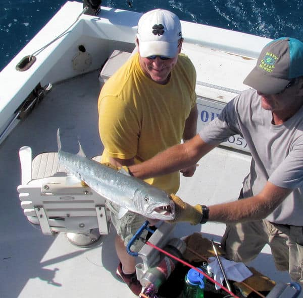Big Barracuda with Big Teeth caught and released in Key West