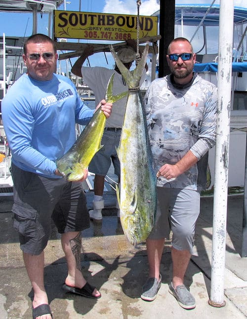 A coupld of good dolphin caught fishing along the color change in Key West Florida