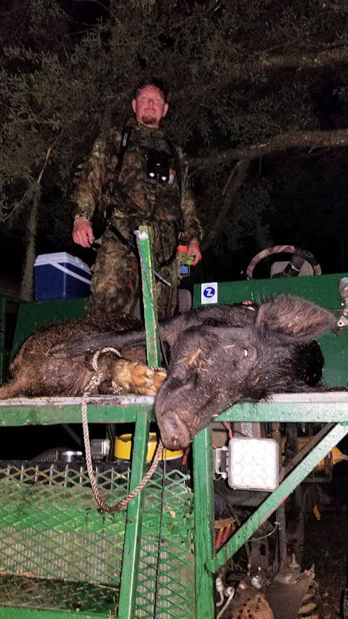 200 bar Hog and 160lb Sow on the Swamp buggy at the Southbound Sportfishing hunting camp