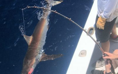 Fish of the day was a Dusky Shark