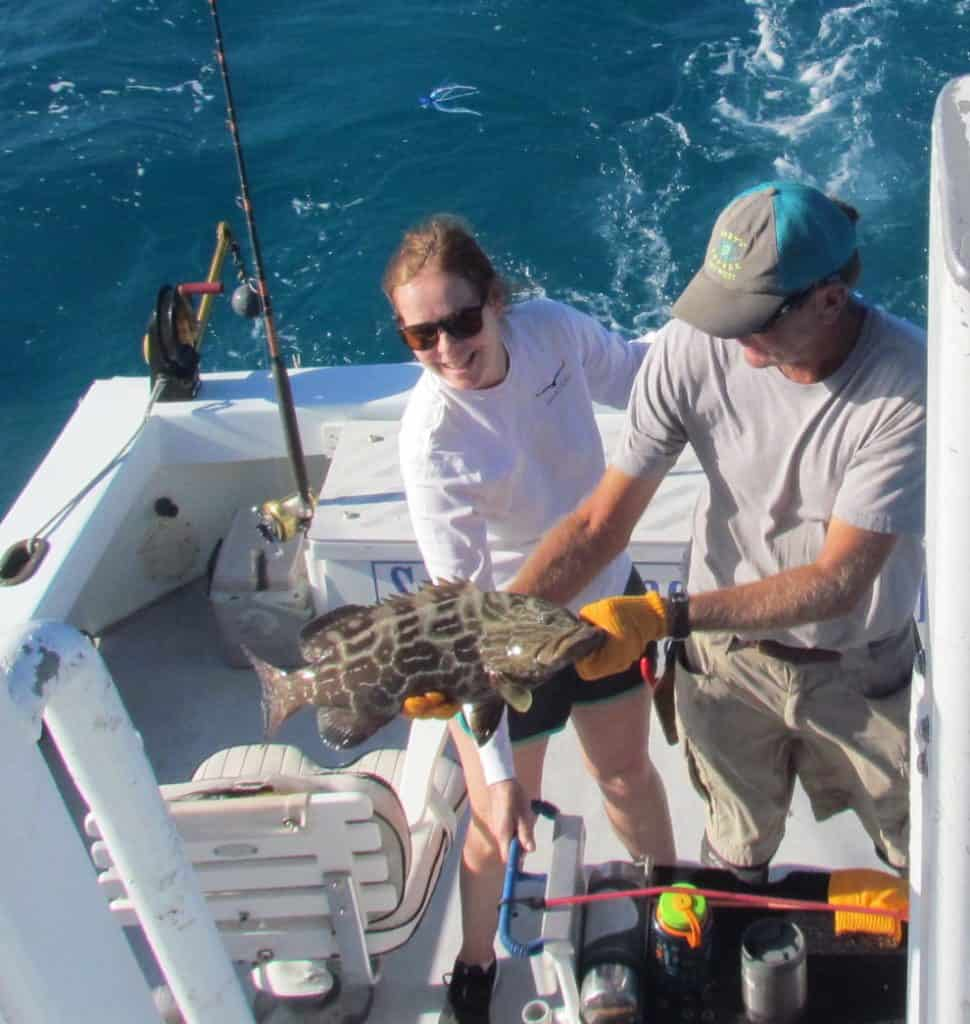 Black Grouper caught and released on the reef off Key West