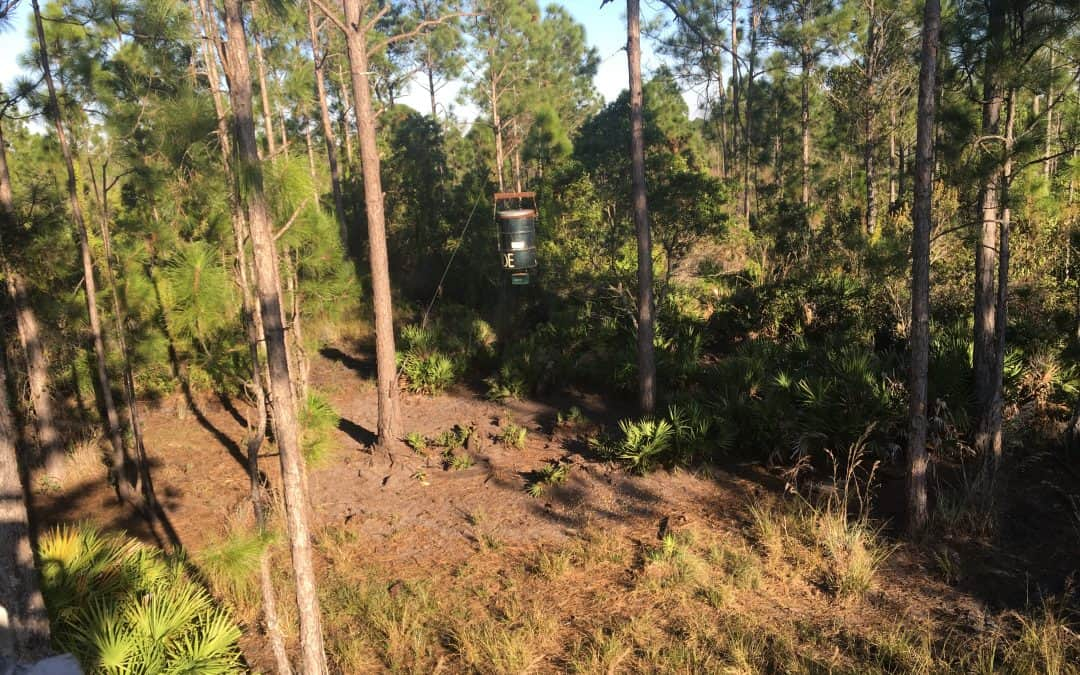 View from a hunting stand in Glades County Florida
