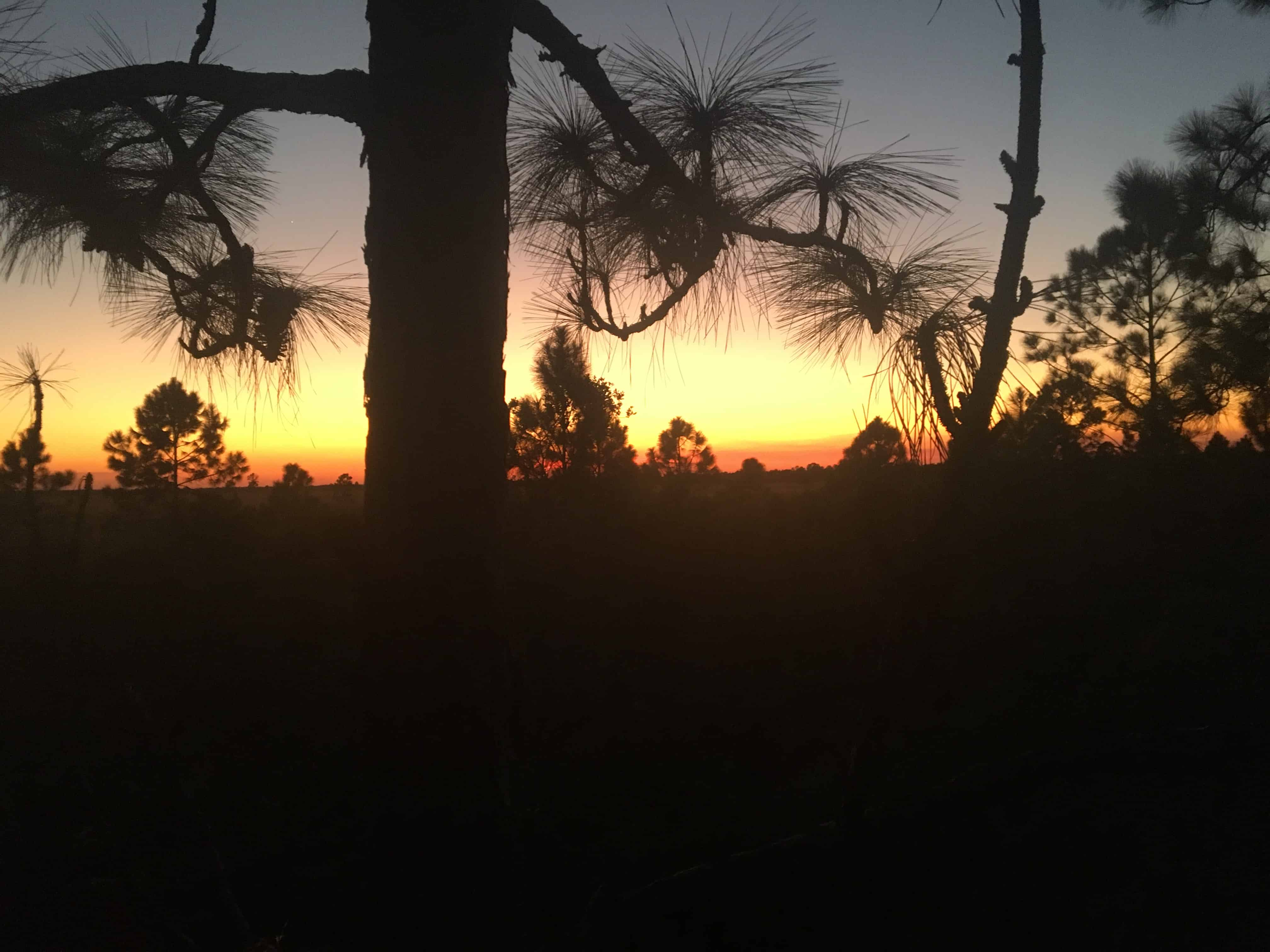 Sunset in Glades County Florida am my hunting camp