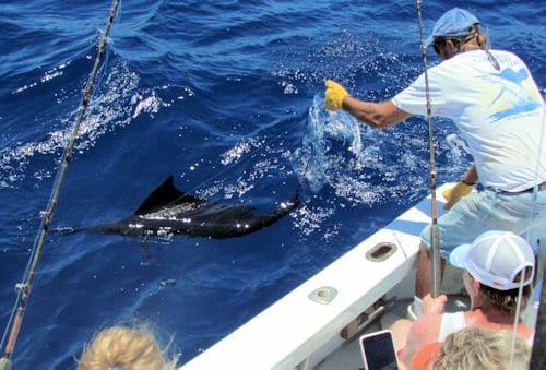 Caught a Sailfish today
